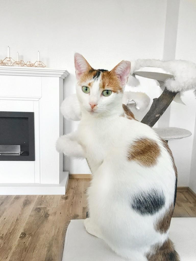 das richtige Katzenspielzeug finden